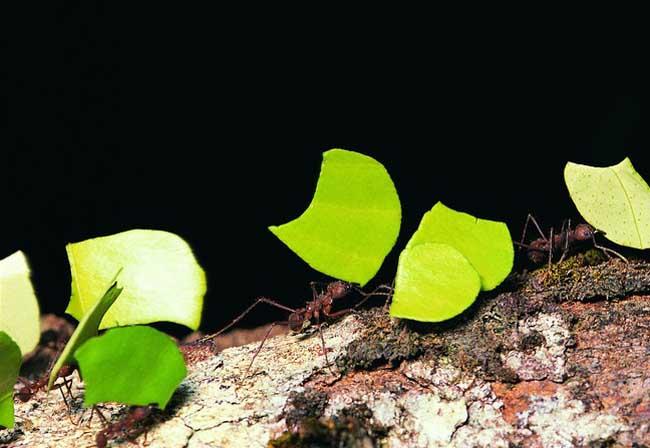 蚂蚁的生活习性