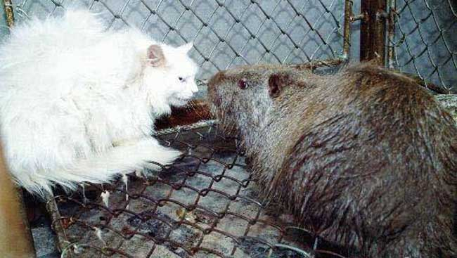 世界上最大的老鼠变异图片
