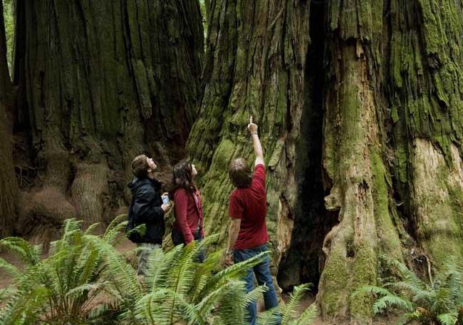 世界上最大的树直径11.1米高83.8米