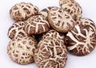 花菇与香菇的区别有哪些?