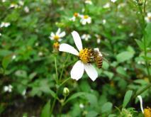 蜜蜂养殖技术资料下载