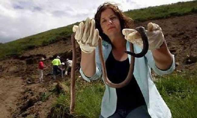 世界上最长的蚯蚓