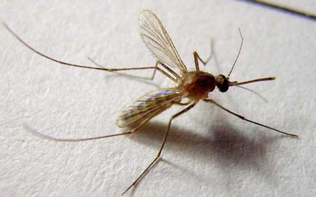 被蚊子咬了怎么止痒消肿