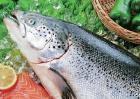 三文鱼市场价格
