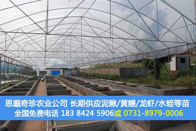 泥鳅养殖成本和利润