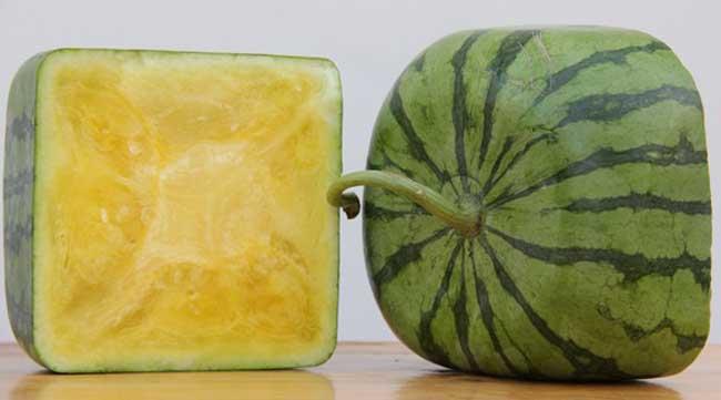 方形西瓜怎么种