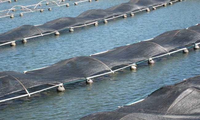 海参养殖技术