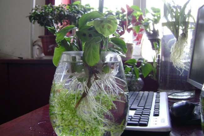 水培植物营养液配方
