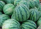 常见的西瓜种类有哪些?