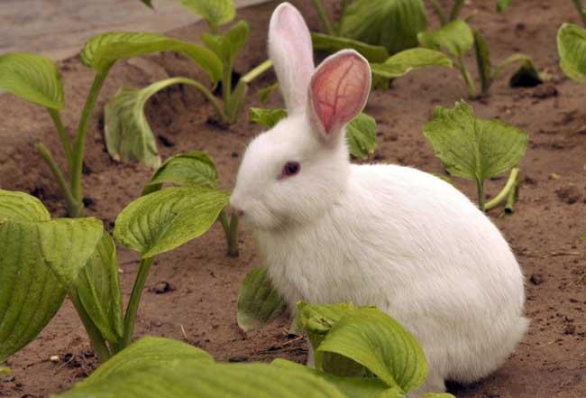 兔子怎么养殖