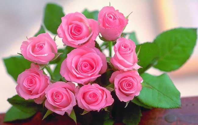 玫瑰花的花语是什么? 1、玫瑰:爱情、爱与美、容光焕发,勇敢 2、红玫瑰:热情、热爱着您,我爱你、热恋,希望与你泛起激情的爱。 3、蓝玫瑰:奇迹与不可能实现的事。 4、粉红玫瑰:感动、暧昧之恋、不能诉诸于口的禁忌之情、铭记于心、初恋,喜欢你那灿烂的笑容。 5、白玫瑰:天真、纯洁、尊敬、谦卑。我足以与你相配。 6、黄玫瑰:为爱道歉,享受和你在一起的日子。在日本,黄玫瑰是分手的代表礼物。在有些地方,黄玫瑰还代表着等待,等待属于你们的爱情。 7、紫玫瑰:忧郁,梦幻,爱做梦。 8、玫瑰捧花:幸福之爱。 9、橙玫