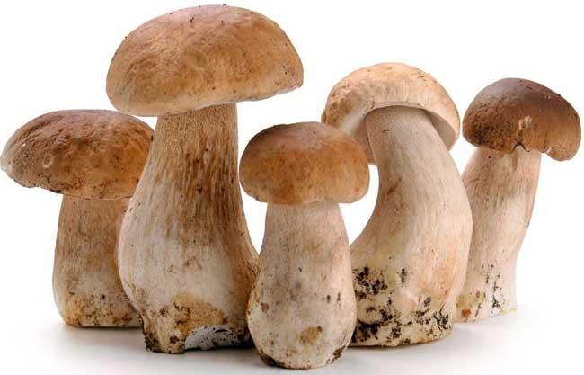 草菇栽培技术