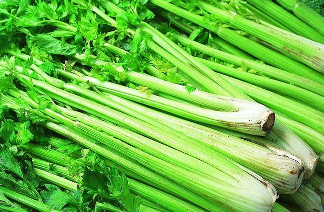 芹菜种植技术