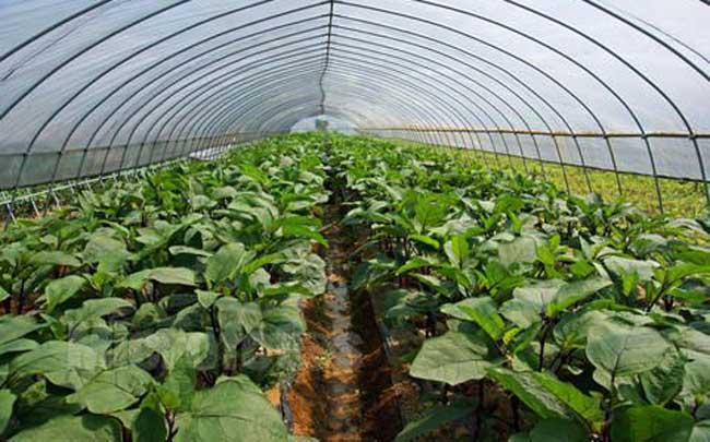 有机蔬菜种植技术