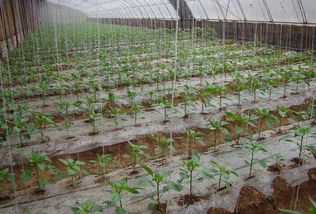 蔬菜育苗技术
