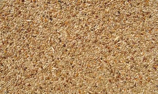 粮食种子储存的要求