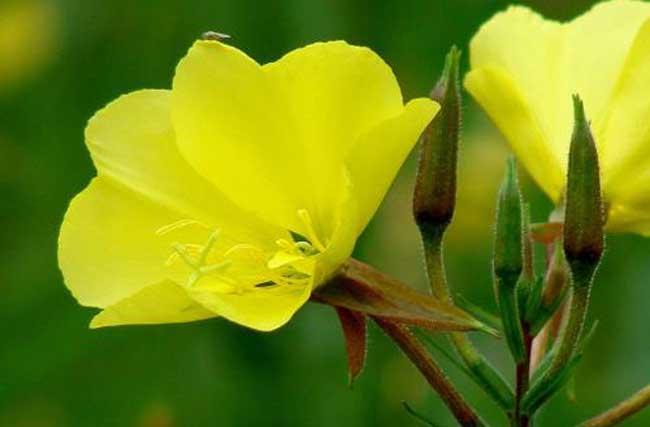 植物虫害的防治方法图片