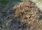 草木灰在花卉病虫害防治上妙用