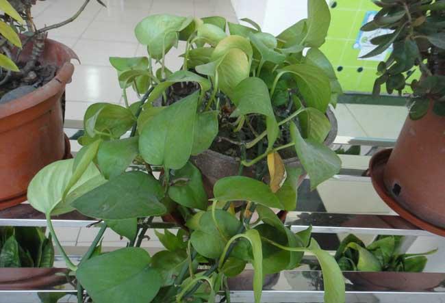 常见的净化空气的室内植物有哪些?