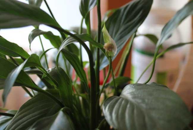 适合室内养的植物有哪些?