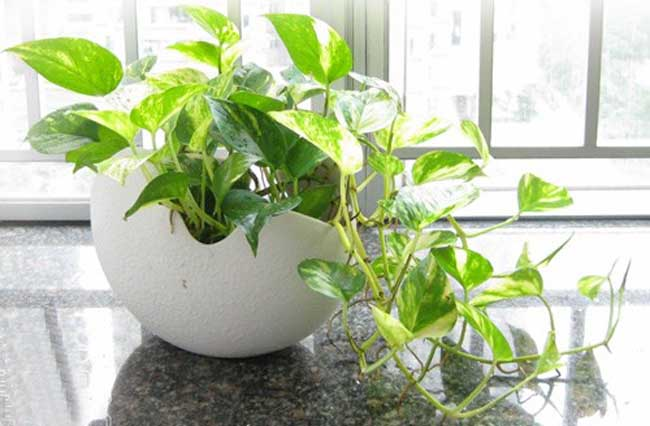 室内水生植物
