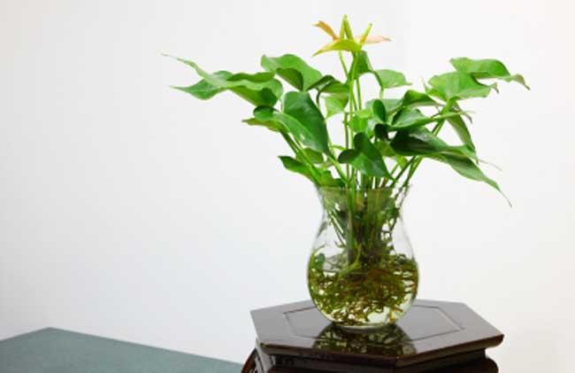 盆栽水生植物怎么养?