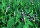 常见的水生植物有哪些?