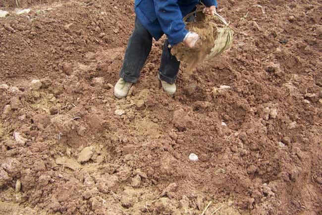有机肥做追肥需注意的问题