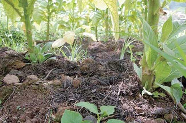 农家肥的腐熟技术