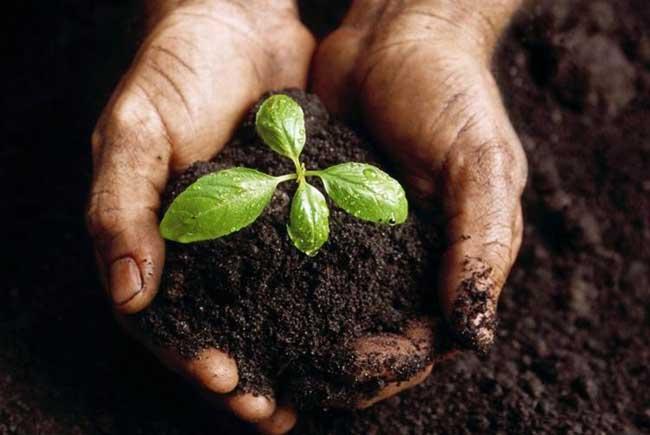 不能经常在蔬菜地施用化肥