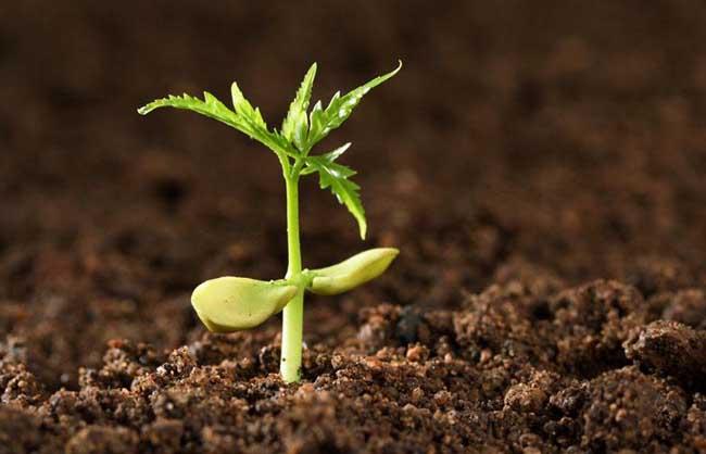 土壤调理剂对障碍土壤有重要改良作用
