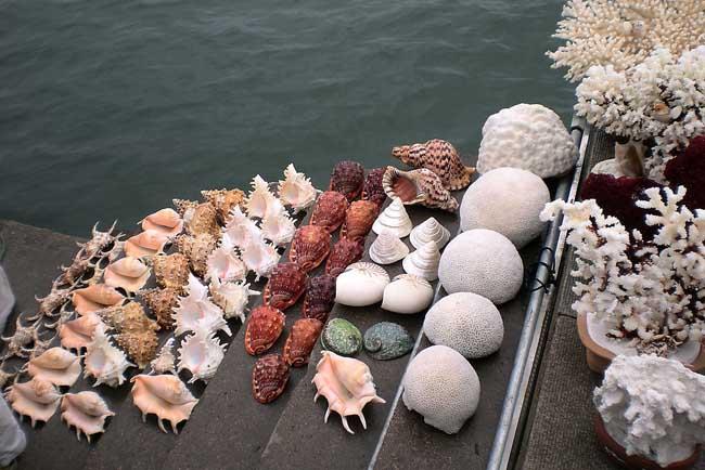 海产品的市场发展有哪些方面