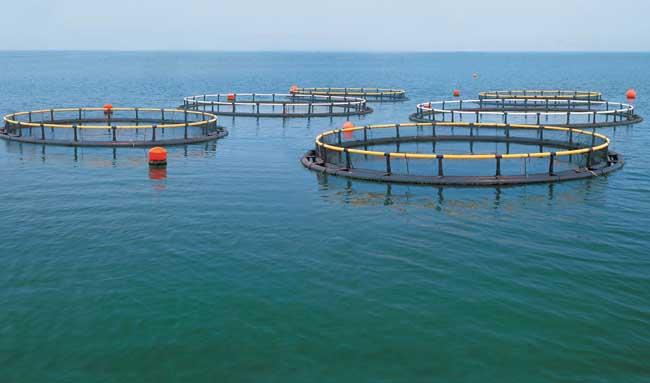 水产养殖业发展前景