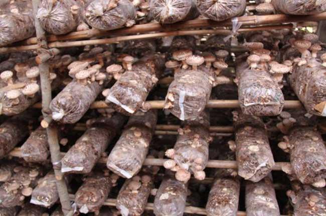食用菌种植