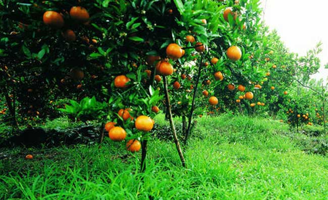 果园里能套种哪些药材
