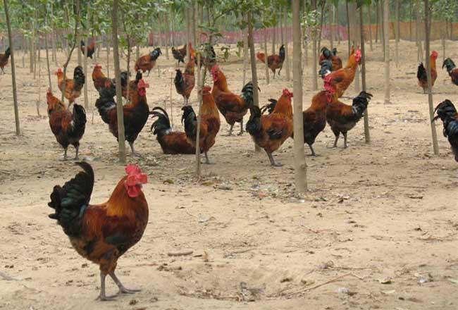 养殖业什么前景最好