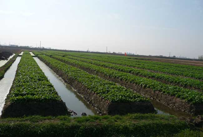 种植园农业