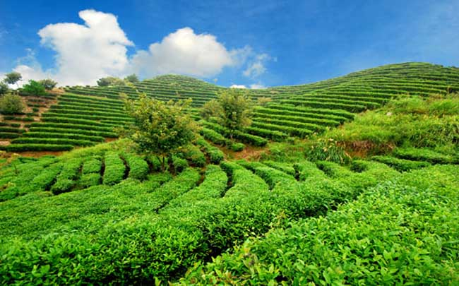 生态农业模式