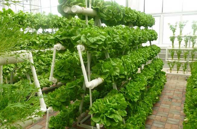 无土栽培的植物有哪些