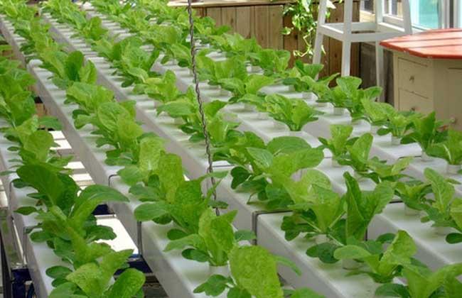 无土栽培蔬菜