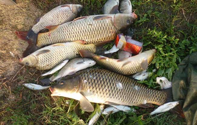 钓鲤鱼技巧