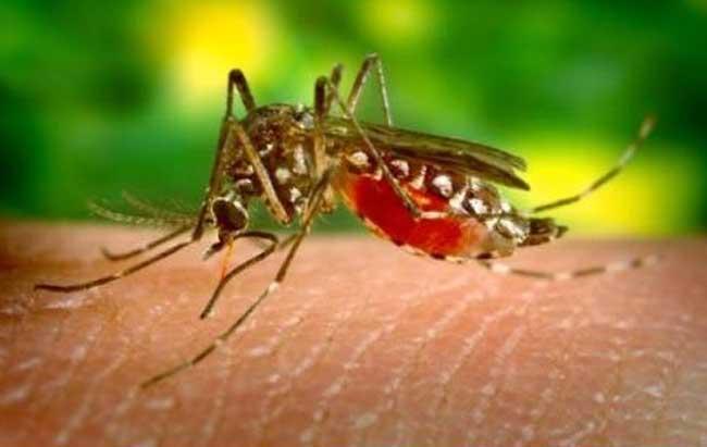 蚊子怕什么