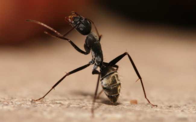 蚂蚁怕什么