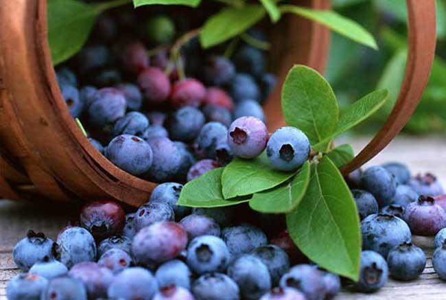 蓝莓的营养价值