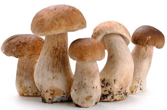 草菇的营养价值