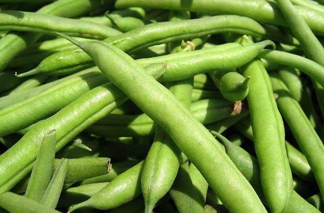 四季豆的营养价值及中毒处理