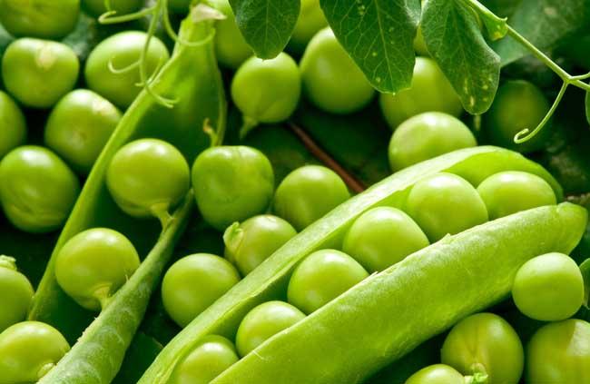 农产品豌豆专题信息