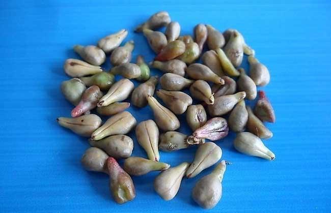 葡萄籽的作用与功效