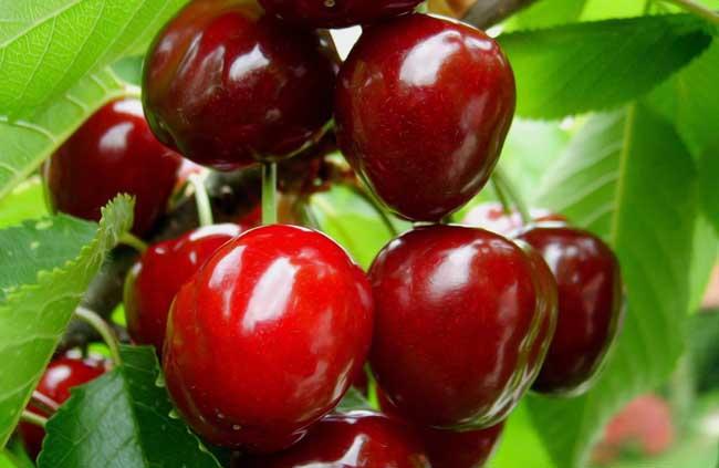 樱桃的营养价值