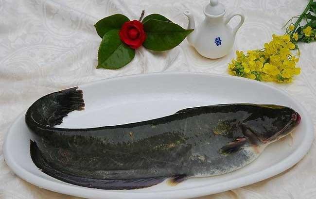 鲶鱼的营养价值